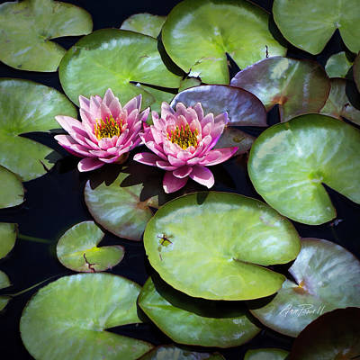 Photograph - Pretty Pink Water Lilies - Photography by Ann Powell