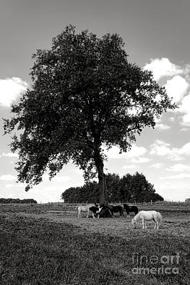 Rural Landscapes Photograph - Pretty Ponies Under A Tree by Olivier Le Queinec