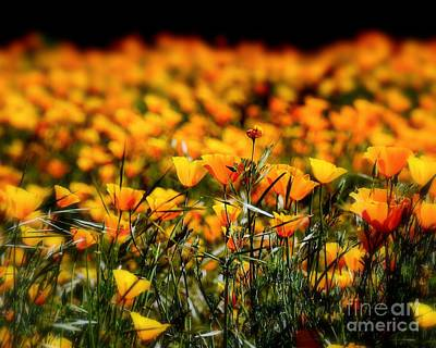 Photograph - Pretty Poppies by Patrick Witz