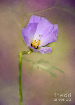 Photograph - Pretty Purple Flower by Sabrina L Ryan