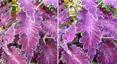 Photograph - Pretty Purple Leaves In Stereo by Duane McCullough