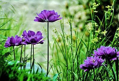 Photograph - Pretty Purple by Michelle McPhillips