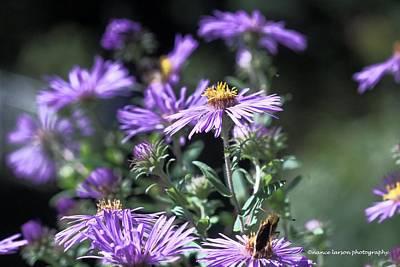 Photograph - Pretty Purple by Nance Larson