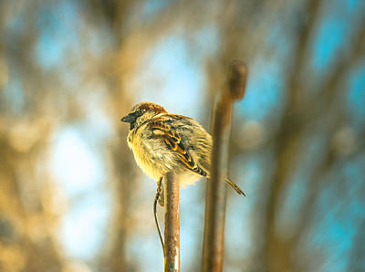 Photograph - Pretty Sparrow by Connie Dye