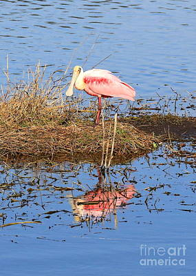 Spoonbill Wall Art - Photograph - Pretty Spoonbill by Carol Groenen
