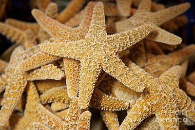 Photograph - Pretty Starfish by Carol Groenen