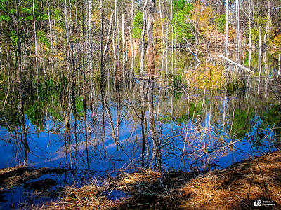 Photograph - Pretty Swamp by Ed Roberts