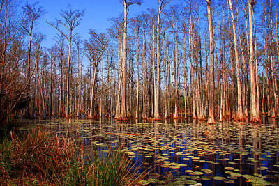 Pretty Swamp Scene Art Print