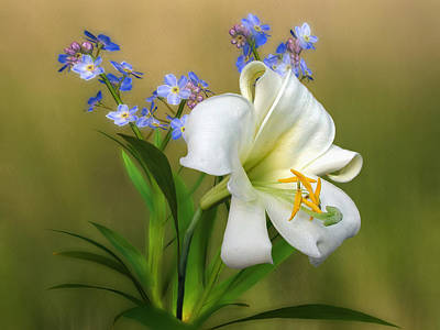 Pretty White Lily Art Print