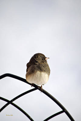 Photograph - Pretty Winter Junco by Christina Rollo