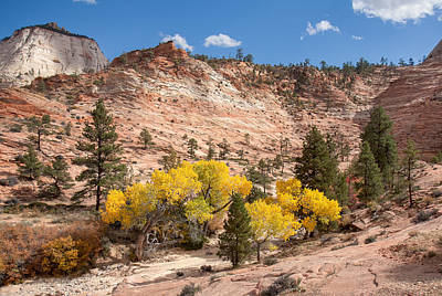 Photograph - Pretty Yellow Leaves At Zion by John M Bailey