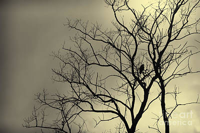 Photograph - Preying Silhouette by Brad Marzolf Photography