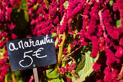 Flowers Shop Photograph - Price Tag On Amaranth Flowers by Panoramic Images