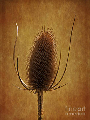 Photograph - Prickly Beauty by Inge Riis McDonald
