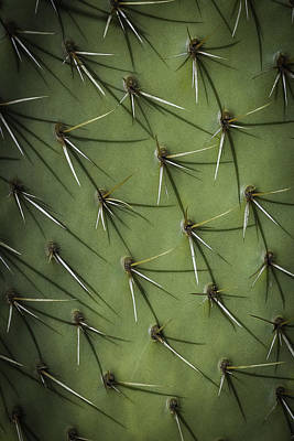 Photograph - Prickly by Dave Hall
