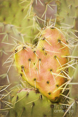 Photograph - Prickly Heart 3 by Marianne Jensen