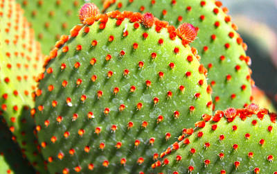 Photograph - Prickly Pair Cactii - Mike Hope by Michael Hope