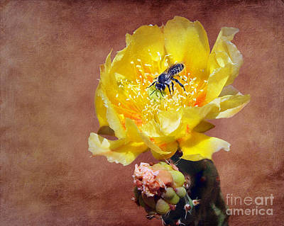 Spiky Petals Photograph - Prickly Pear And Bee by Nikolyn McDonald