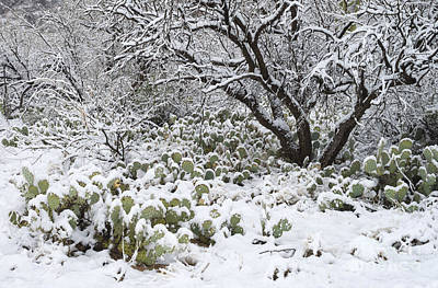 Mesquite Tree Photograph - Prickly Pear Cactus And Mesquite Tree by John Shaw