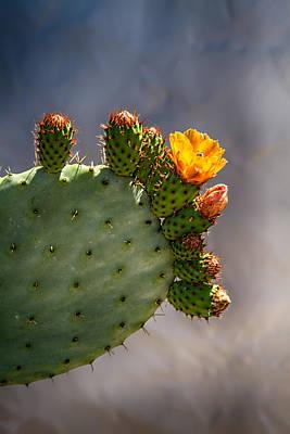 Photograph - Prickly Pear Cactus Flower by John Haldane