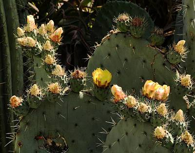 Prickly-pear-famely Original
