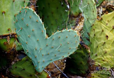Photograph - Prickly Pear Heart by Kerri Mortenson