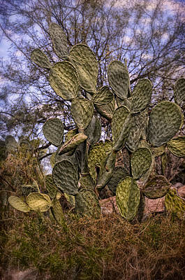 Mark Myhaver Rights Managed Images - Prickly Pear No.1 Royalty-Free Image by Mark Myhaver