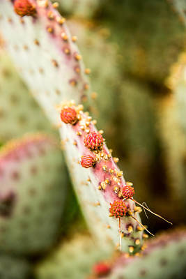 Photograph - Prickly Pear by Norchel Maye Camacho