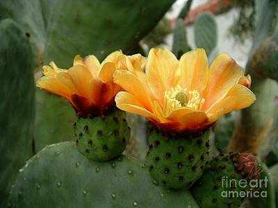 Marilyn Photograph - Prickly Pear Perfection by Marilyn Smith