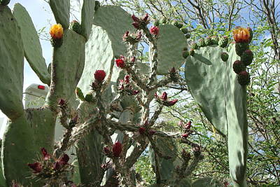 Photograph - Prickly Pear by Susan Woodward