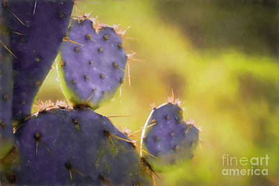 Photograph - Prickly Pear Valentines by Marianne Jensen