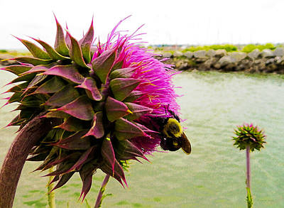 Photograph - Prickly Situation by Shawna Rowe