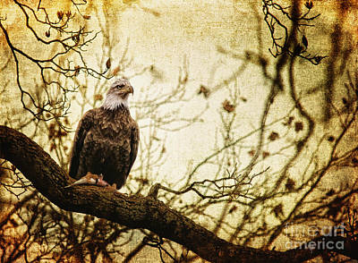American Eagle Digital Art - Pride by Lois Bryan