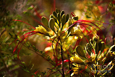 Photograph - Pride Of Barbados by Lana Trussell