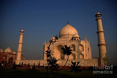 Photograph - Pride Of India by Jacqueline M Lewis
