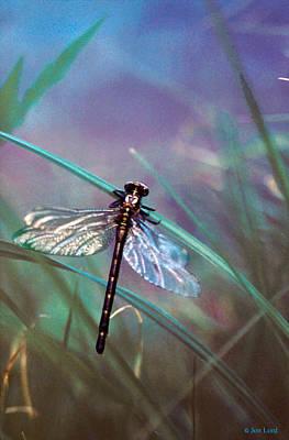 Photograph - Primal Dragons II by Jon Lord