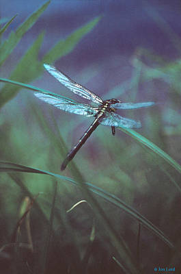 Photograph - Primal Dragons Iv by Jon Lord