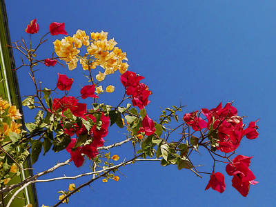 Art Print featuring the photograph Primary Colors by Ginny Schmidt