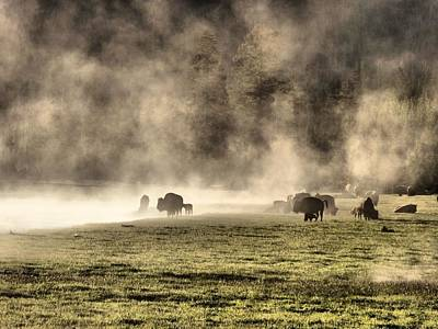 Bison Photograph - Buffalo Herd In Yellowstone by Dan Sproul