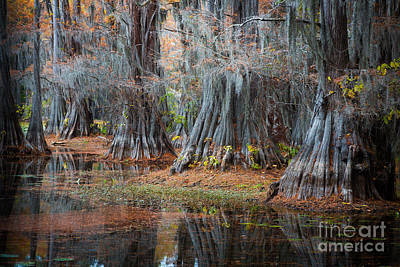 Cypress Swamp Photograph - Primeval Forest by Inge Johnsson