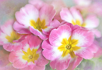 Pink Primroses Photograph - Primrose Bouquet by David and Carol Kelly