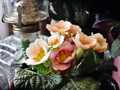 Photograph - Primroses At Noon by VLee Watson