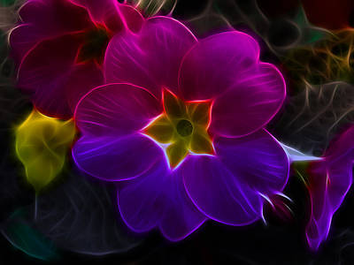 Photograph - Primula Rainbow by Fiona Messenger