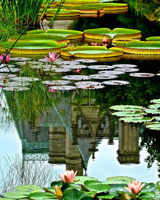 Lilies Royalty-Free and Rights-Managed Images - Prince Charmings Lily Pond by Frozen in Time Fine Art Photography