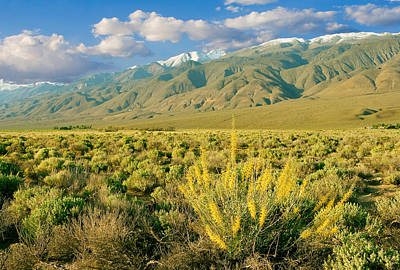 Princes Plume And White Mountains - Owens Valley California Art Print