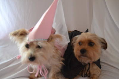 Dog Photograph - Princess And The Count by Kim Stafford