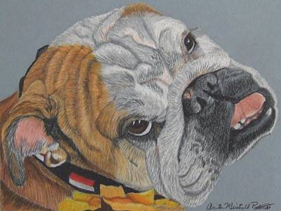 Drawing - Princess - English Bulldog Commission by Anita Putman