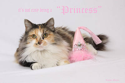 Photograph - Princess by Kimber  Butler
