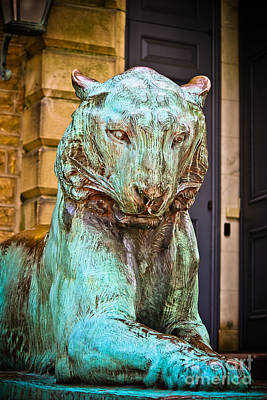 Photograph - Princeton Tiger I by Colleen Kammerer