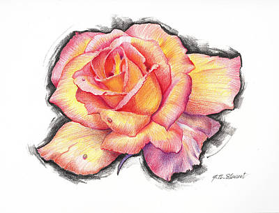 Drawing - Prismacolor Rose by John Norman Stewart